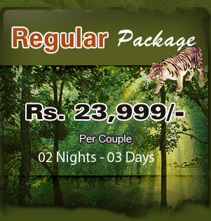 Regular Package for Jim Corbett Tour