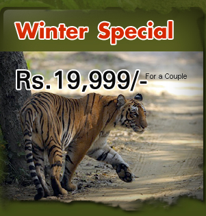 Winter Special Package